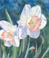 Pink Charm Daffodils