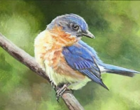A Moment's Rest - Eastern Bluebird