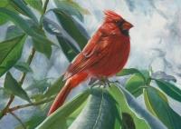Cardinal & Rhodies
