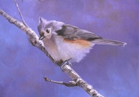 Titmouse on Blue