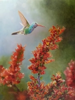 Broad-Billed Hummingbird & Ocotillo