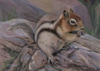 Chipmunk - Lake Louise, Canada