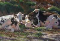 Resting Holsteins
