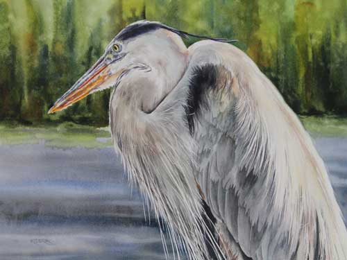 great_blue_heron_brendakidera_watercolor_11x15_large